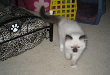 Dax the kitten